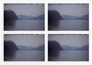 Steller's sea cow observations, detail, 2012.